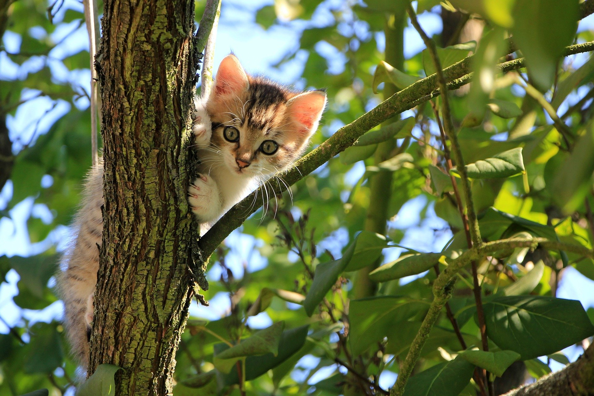 Majiteľa môže vystrašiť pohľad na vašu vlastnú mačku na strome. Riešením problému však zvyčajne je zostať pokojný.