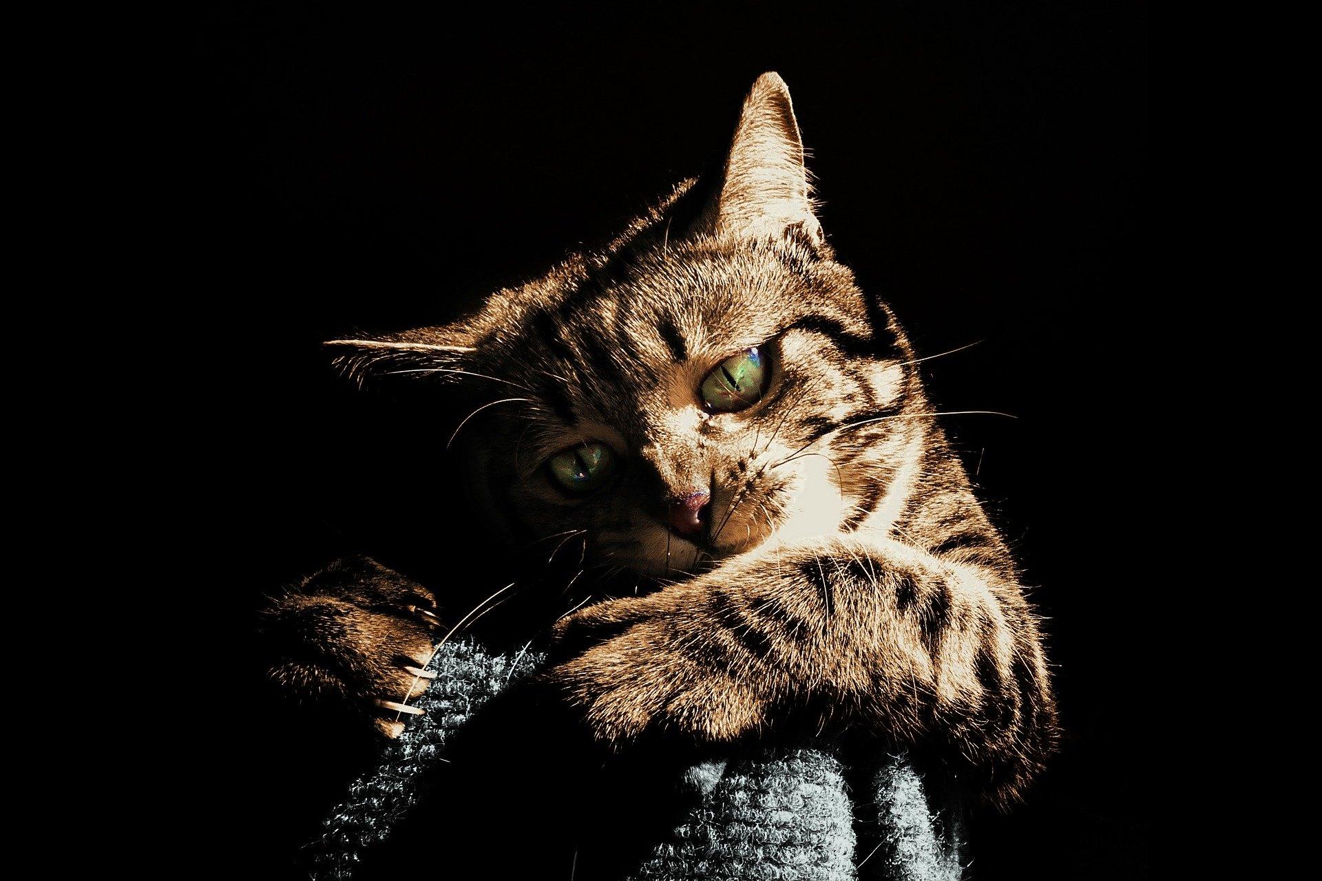 Uhryznutie mačky nikdy nesmiete podceňovať - môže sa stať príčinou vážnej infekcie, ktorá si vyžaduje hospitalizáciu.