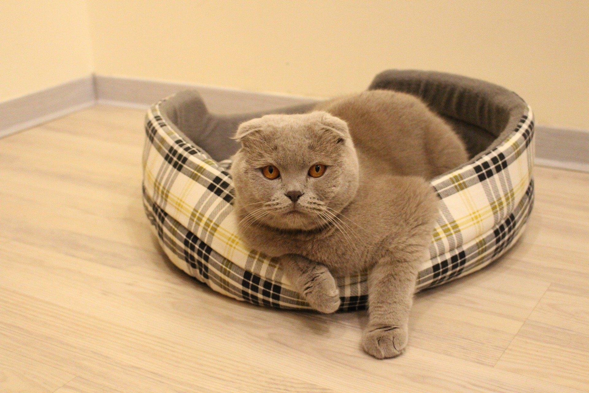 Zlyhanie obličiek u mačky vedie k silnej intoxikácii tela. Musíte rýchlo reagovať na príznaky choroby.