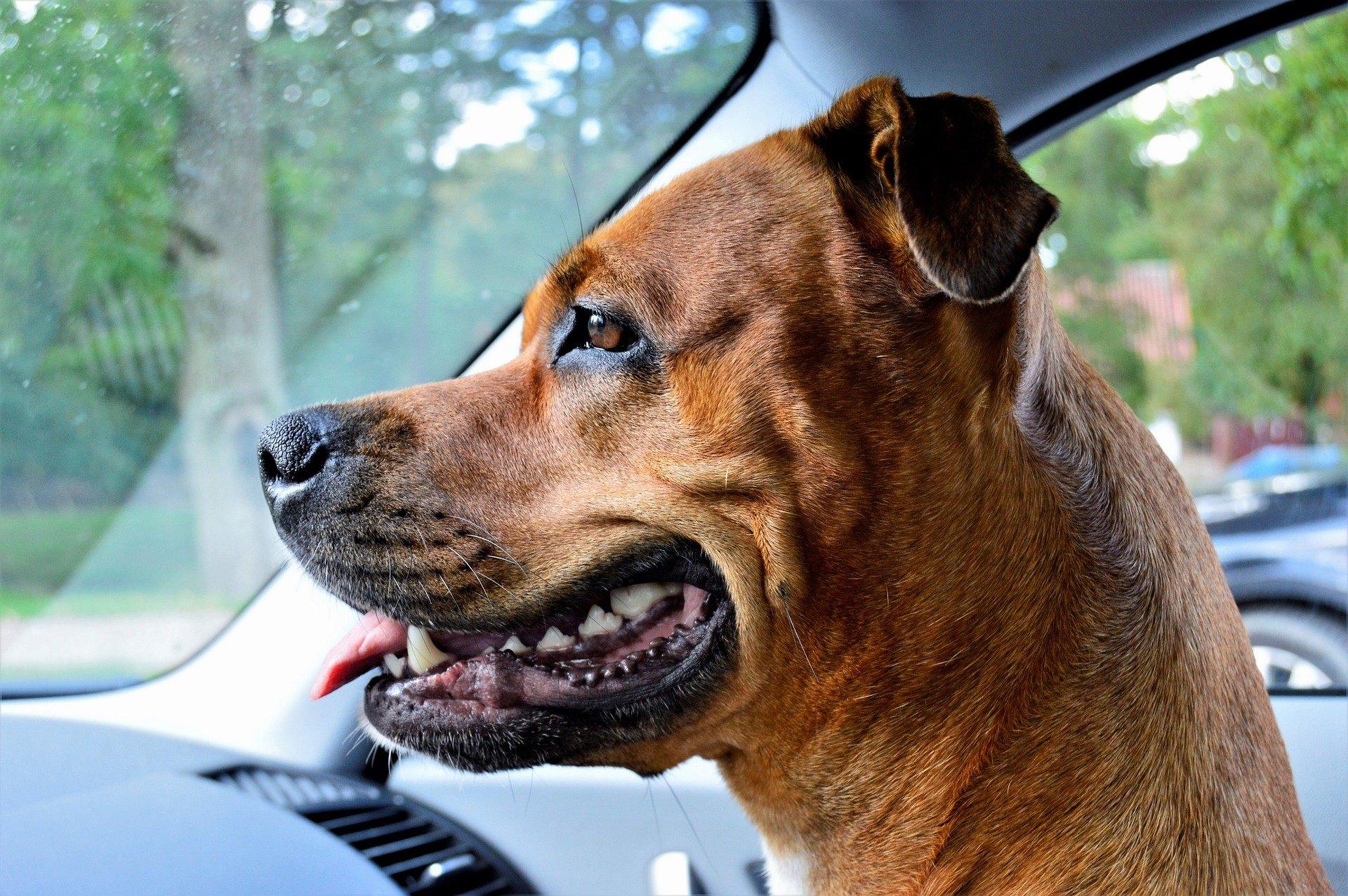 Majitelia sa musia postarať o prevenciu zápalu ďasien - u psa sa môže stať začiatkom nebezpečných chorôb.