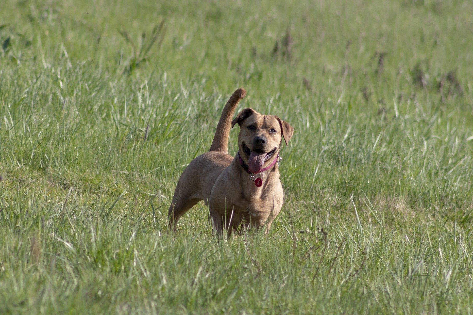 Chorobám kože u psov, najmä tie, ktoré sú spôsobené infekciami a parazitmi, je možné zabrániť náležitou starostlivosťou.