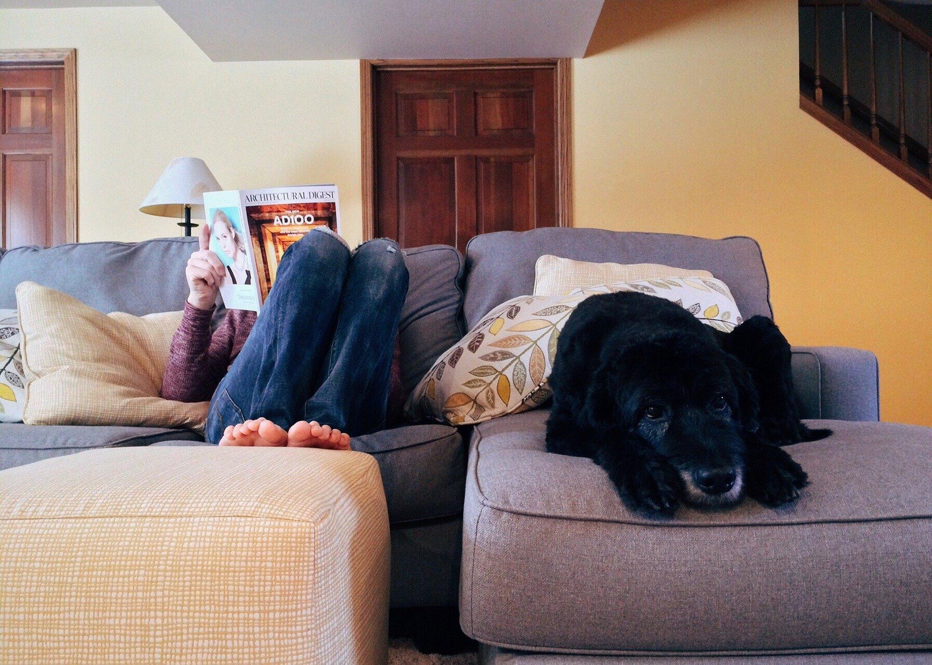 Separačná úzkosť u psa je komplex správania, ktorý sa prejavuje úzkosťou, keď je domáce zviera ponechané doma.