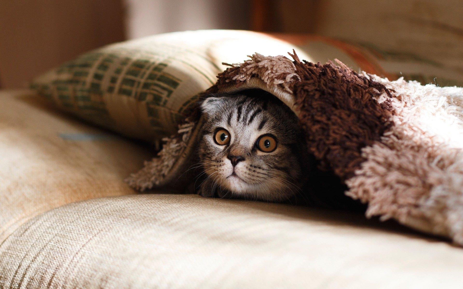Zvracanie je jedným z najbežnejších ochorení mačiek. Zistite, aké sú ich príčiny a ako im predchádzať.