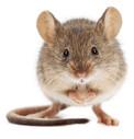 Klietky pre myši