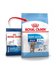 ROYAL CANIN Maxi junior active 15 kg