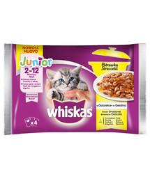 Whiskas Junior Casserole výber z hydinového v želé 13 x 4x85g