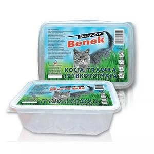 Ľadviny a žalúdok mačky