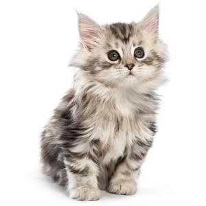 Krmivo pre mačiatka