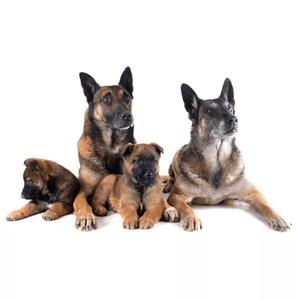 Krmivo pre psov: rozdelenie podľa veku psa