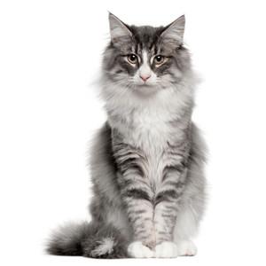 Krmivo pre dospelé mačky