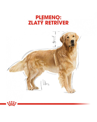 ROYAL CANIN Golden Retriever Adult 12 kg granule pre dospelého zlatého retrievera