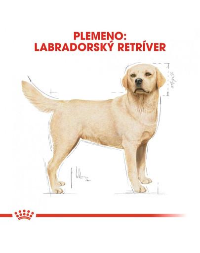 ROYAL CANIN Labrador Adult 3 kg granule pre dospelého labradora