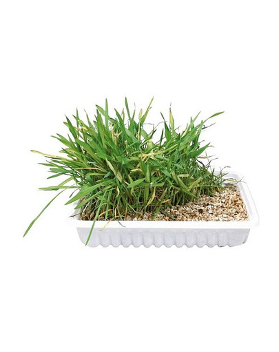 TRIXIE Miska s trávou pre mačky  130 gr