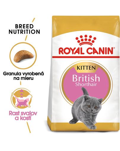 ROYAL CANIN British Shorthair Kitten 400g granule pre britské krátkosrsté mačiatka