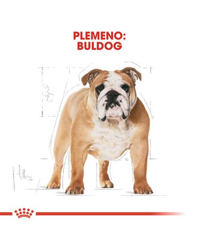 ROYAL CANIN Bulldog Adul 3kg granule pre dospelého buldoga