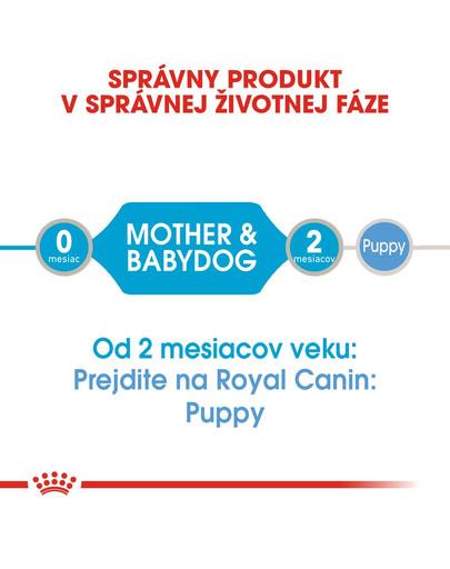 ROYAL CANIN Starter Mousse 195g konzerva pre brezivé alebo dojčace suky a šteňatá