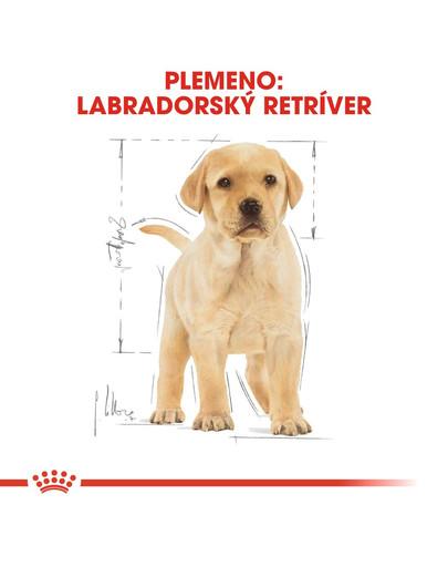 ROYAL CANIN Labrador Puppy 3 kg granule pre šteňa labradora